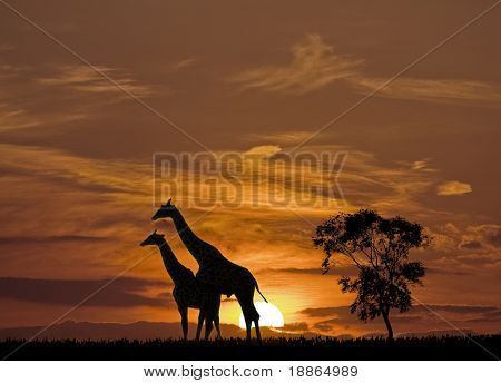 Giraffes and the sunset in Africa