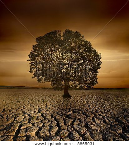 Single tree dying in a cracked land because of pollution and global warming