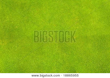 Perfect green grass texture from golf field