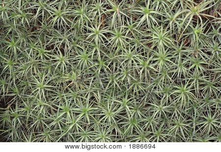 Plant Texture