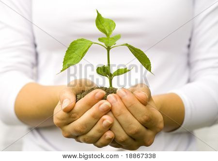 Uma planta em mãos femininas no fundo branco