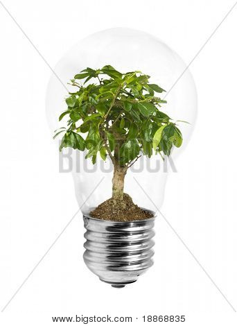 Lightbulb with green plant inside on white