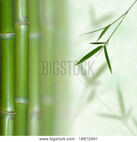 Beautiful Bamboo Border. Bamboo a natural background