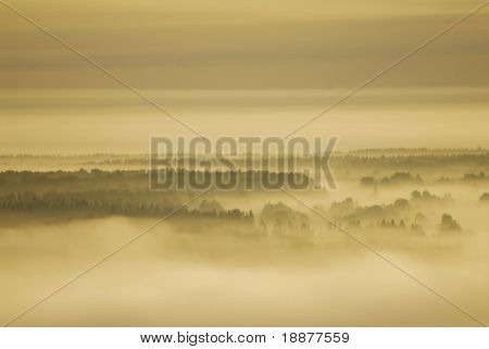 hazy morning in Russian forest