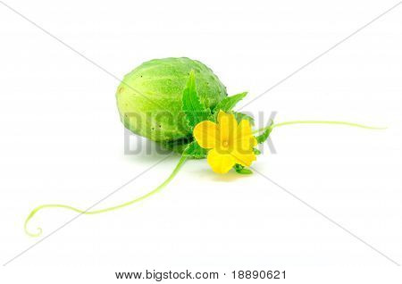 Cucumber with Green Leaf Flower, And Tendril