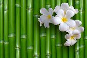 foto of bamboo forest  - Bamboo background - JPG