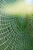 pic of spider web  - spiderweb with drops - JPG