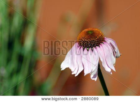 Flor caído