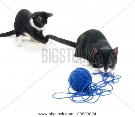 Cute Cats With Yarn
