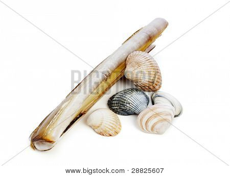 small group of shells isolated on white background