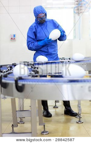 fully protected in blue uniform engineer examining xxl size egg at production line