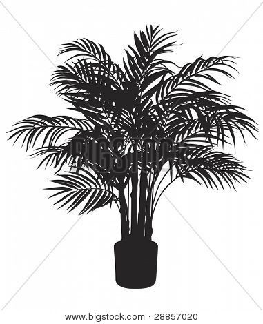 Bamboo tree silhouette. Vector illustration