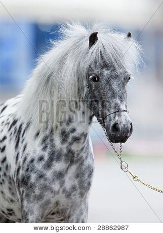Pony gray portrait