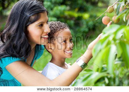 happy young mother and son looking at litchis in litchi orchard