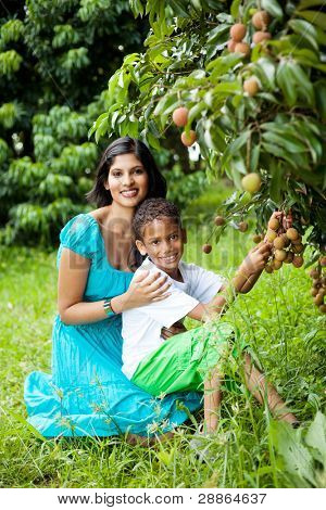 happy indian mother and son picking lychees together