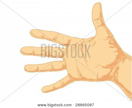 Hand isolated on a white background.