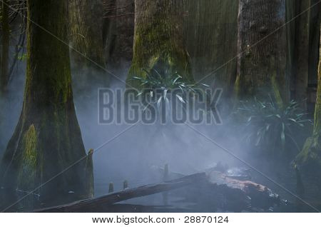 Fog On The Swamps