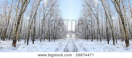 Hiking trail in snowy sycamore forest. Bohemian Forest. Czech Republic. Europe.