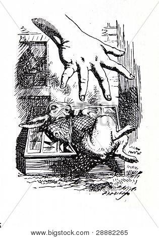 Alice extiende su mano para agarrar el conejo blanco. Grabado por John Tenniel (Reino Unido, 1872). Mal