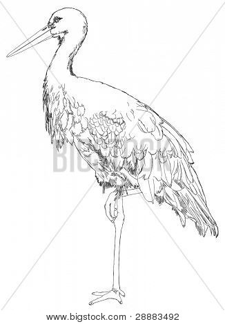 stork standing on one leg - black and white line sketch. Vector drawing