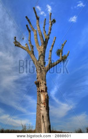 Tree On Blue Background