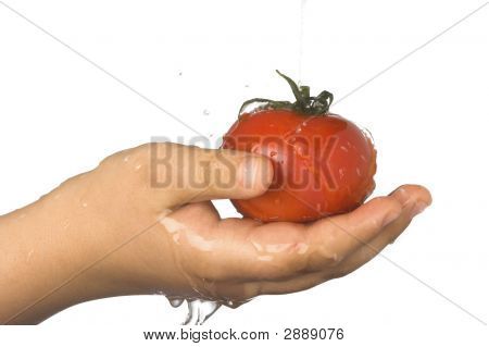 Washing The Tomato