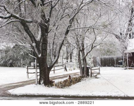 Snowy,Winter Trees