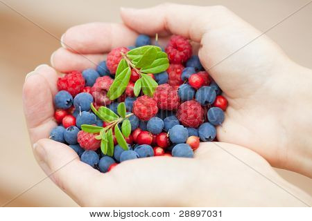hands holding fresh berries