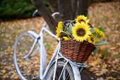 Bouquet Of Sunflowers On Retro Styled Bicycle At Autumn Forest. poster
