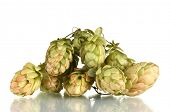 pic of hop-plant  - beautiful green hop isolated on white - JPG