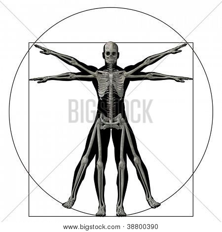 High resolution Vitruvian human or man as a concept,metaphor or conceptual 3d anatomy body for biology,anatomical, proportion ,medicine,symbol,physiology,skeleton,health,humanity or morphology