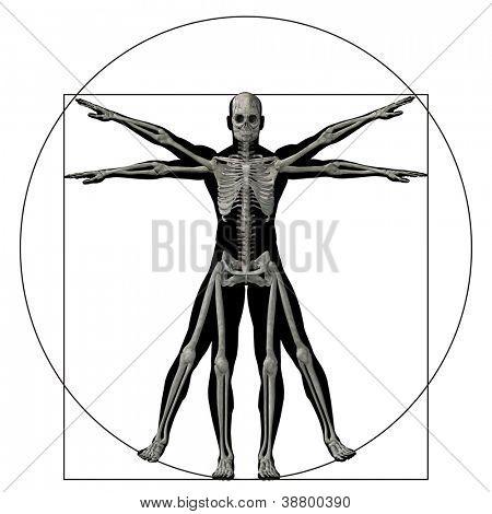 Alta resolución Vitruvio ser humano o al hombre como un concepto, la metáfora o la anatomía 3d conceptual del cuerpo para biolo