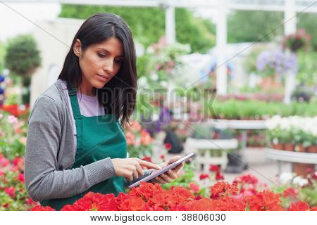 Employee checking red flowers with tablet pc in garden center thoughtfully