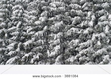 Winter Forest Texture