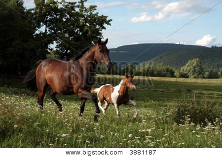 Mare With Foal Out At Grass