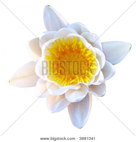 isoliert lotus
