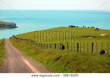 Gravel Road And Cows Behind Farm Fence