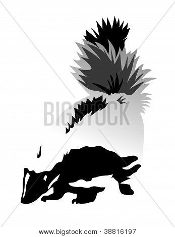 Vector illustration of a skunk