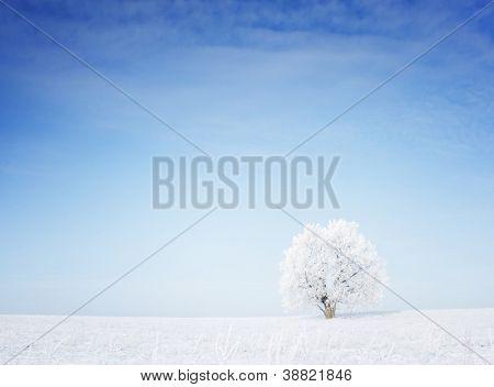 Winter Baum in einem Feld mit blauem Himmel