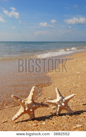 Two Starfish On Beach