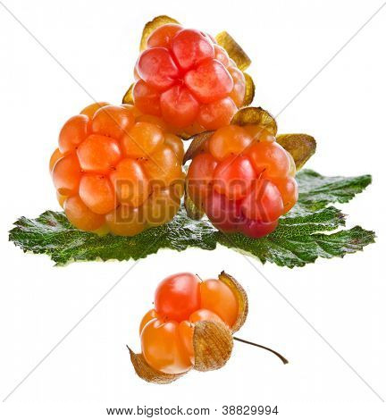 cloudberry close up isolated on white