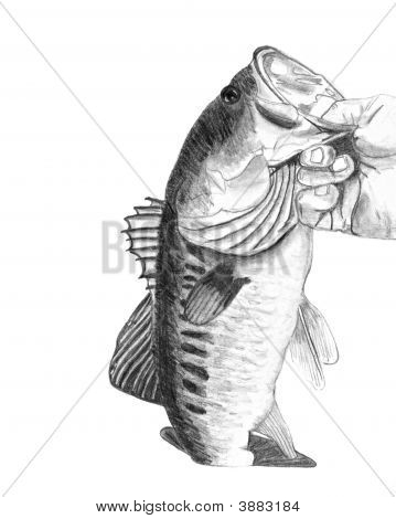 Bass Fish Drawing