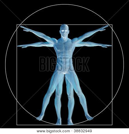 High resolution Vitruvian human or man as concept,metaphor or conceptual 3d anatomy body for biology,anatomical,Leonardo,proportion,medicine,symbol,physiology,skeleton,health,humanity or morphology