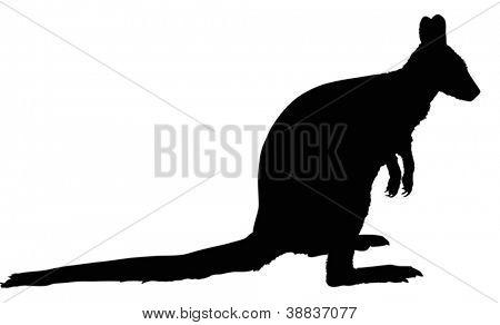 ilustração com silhueta de canguru único isolada no fundo branco