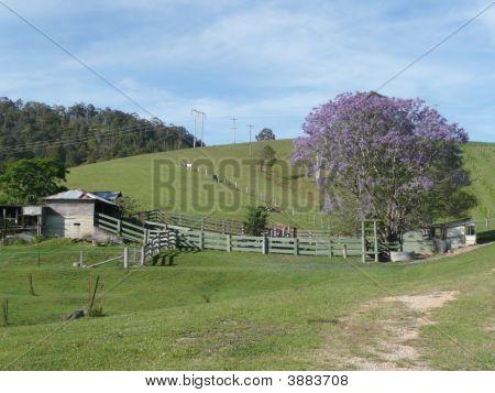 Rural Scene Bellbrook N.S.W.  Australia.