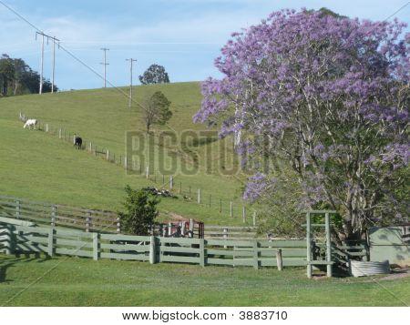 Rural Scene 3 Bellbrook N.S.W.  Australia.