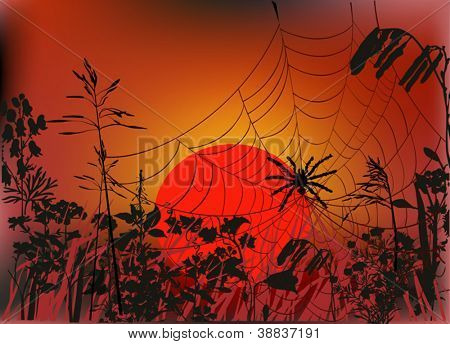 illustration with spider web in autumn grass