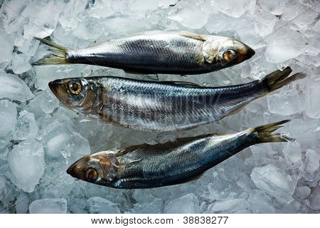 fresh herring on ice close up