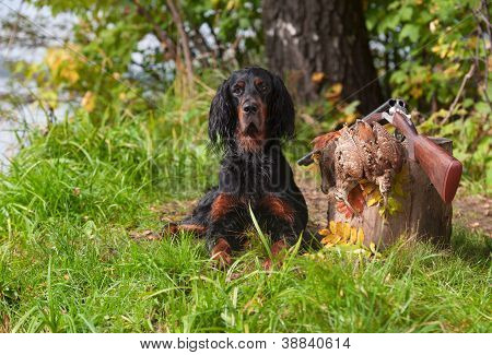 setter near to gun and trophies