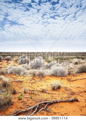 An image of the dry australian outback